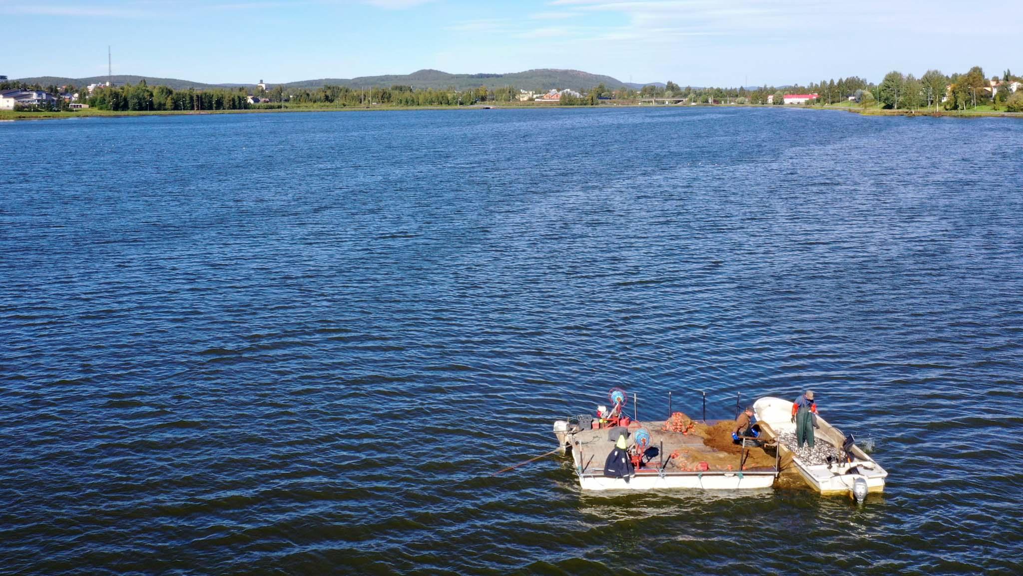 Nu börjar årets insats för friskare sjöar