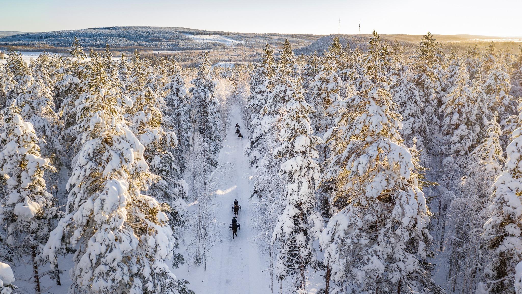 Flygfoto av travträning på vinterväg i skog