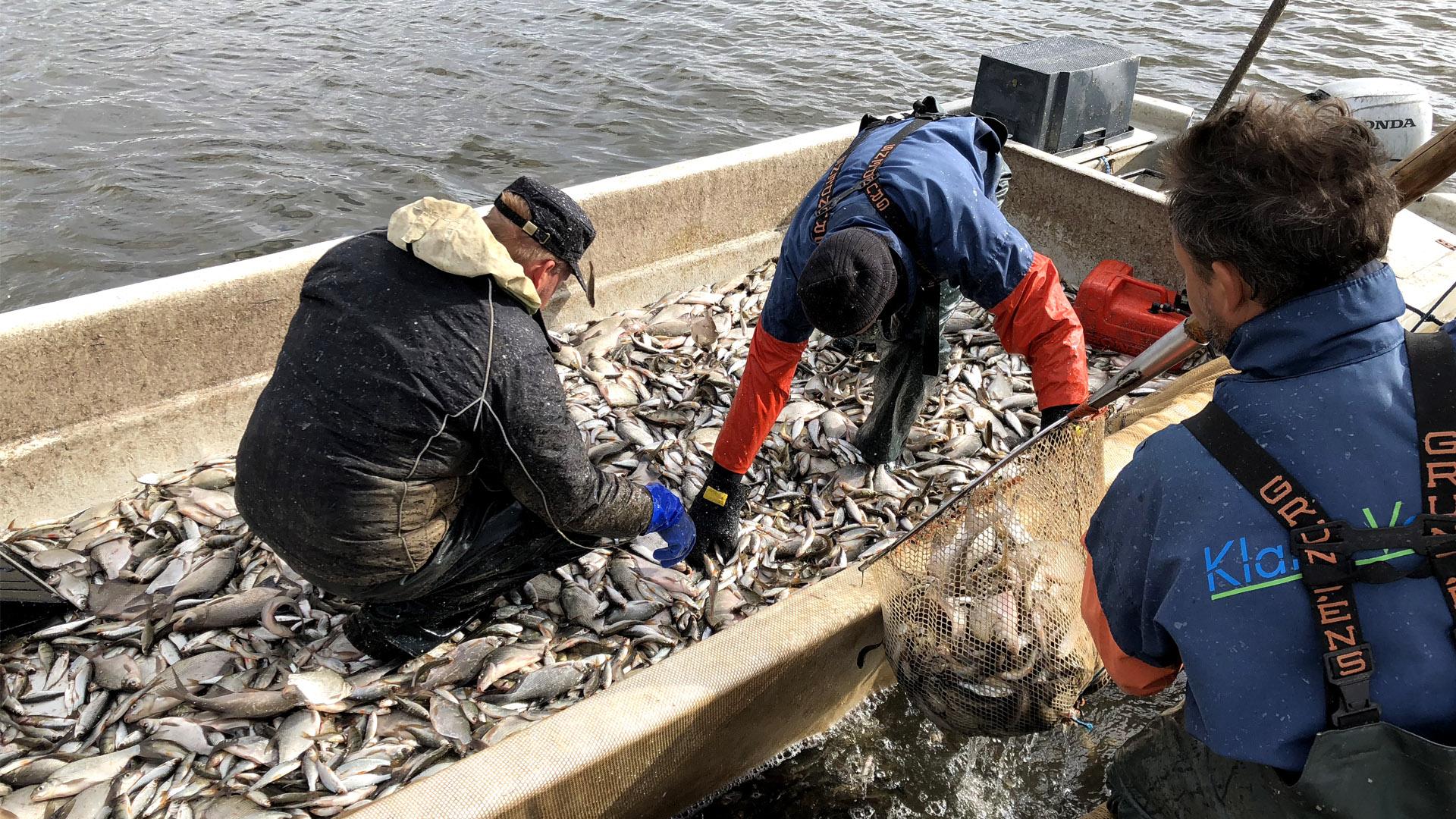 Klara vatten under 2018 års reduktionsfiske i Svartbyträsket