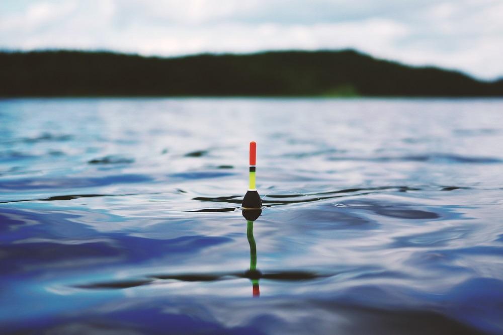 Flöte guppar på vattenspegel.