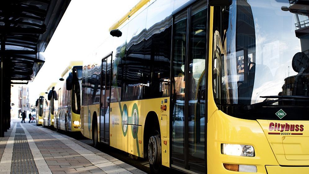 Tre gula stadsbussar står vid hållplats.